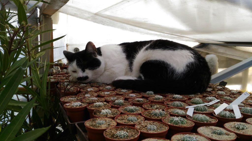 Kaktusy Stuchlík - náš pomocník Merlin