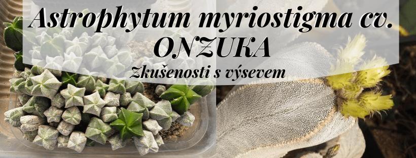 Zkušenosti s výsevem u Astrophytum myriostigma cv. Onzuka