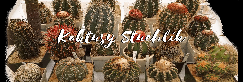 Kaktusy Stuchlík